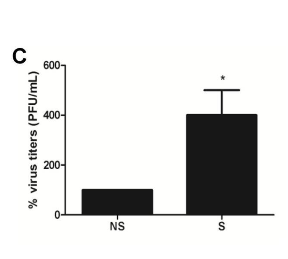 300% increase of viral infection in senescent cells