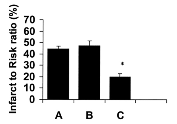 Size of damage in heart in control mice (A), mice given standard vasopressin therapy (B), and mice give GLP-1 (C).