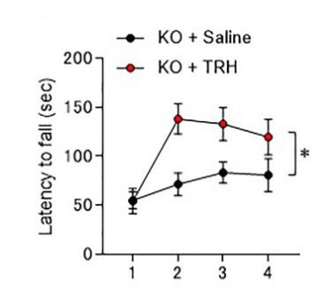 Knockout mice treated with TRH learned much faster after four trials, with time before falling from rotating rod being nearly twice that of untreated mice. This shows improved rates of motor learning